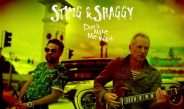 New in playlist : Sting & Shaggy – Don't Make Me Wait
